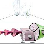 Struttura tridimensionale del tendine