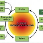 Il ciclo arginina-citrullina